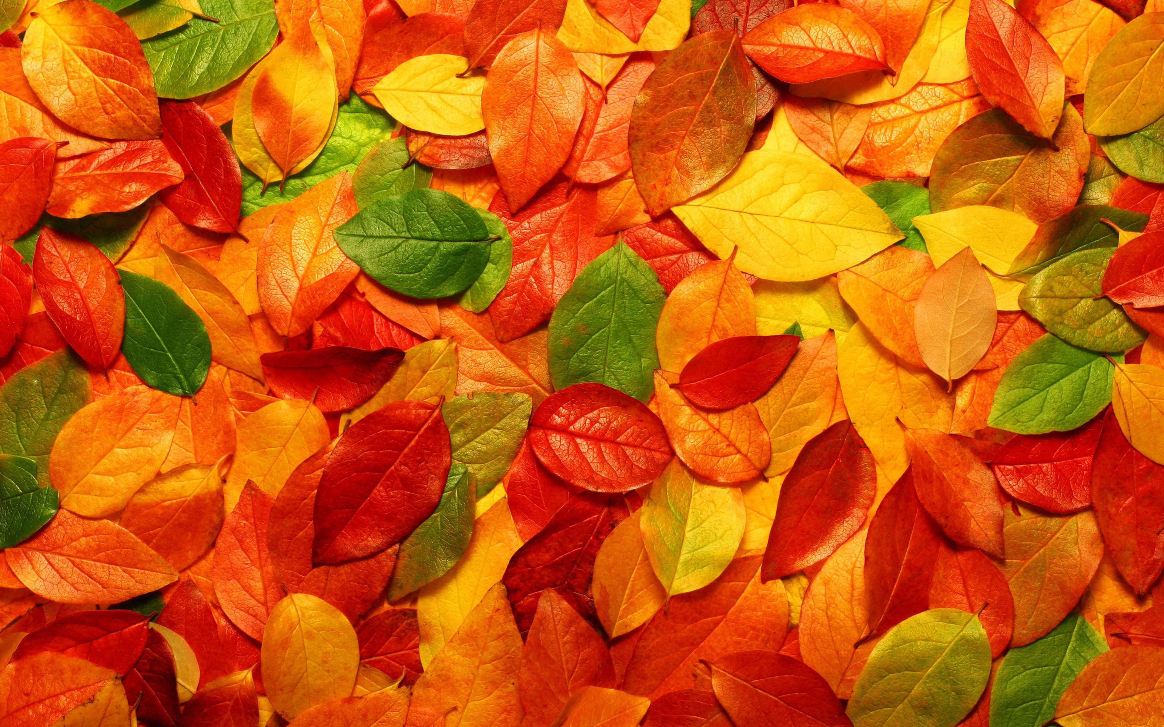 Fonds d 39 cran automne feuilles mortes maximumwall - Image feuille automne ...
