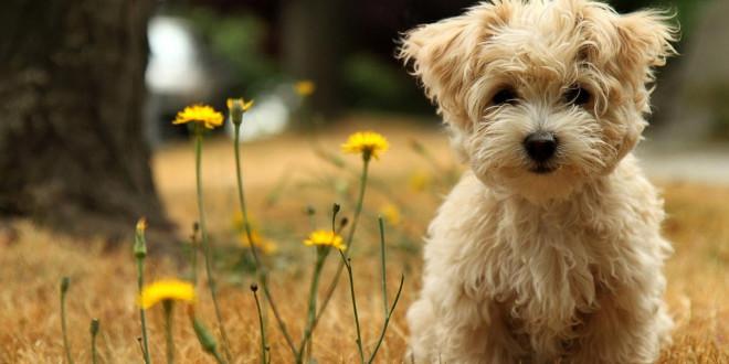 fond d'ecran gratuit de chien
