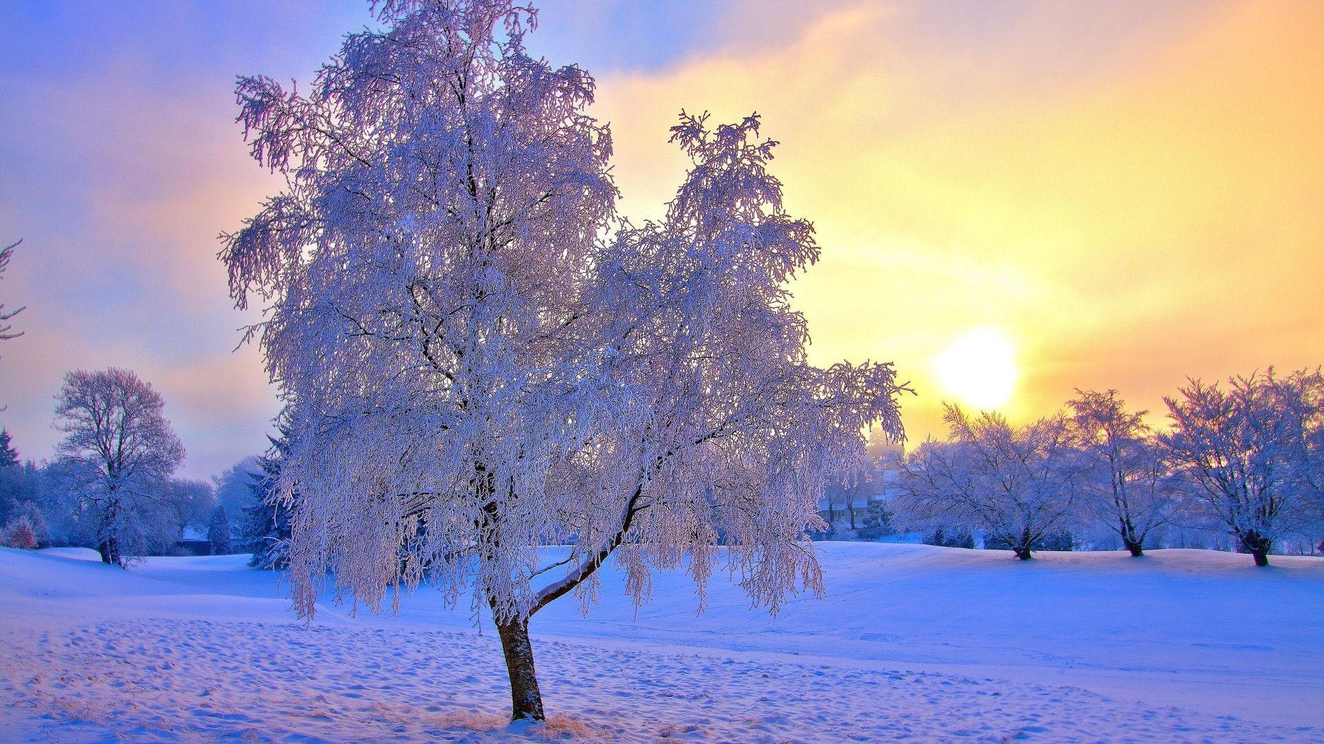Arri res plans foret hiver 2015 maximumwall for Foto de fond ecran