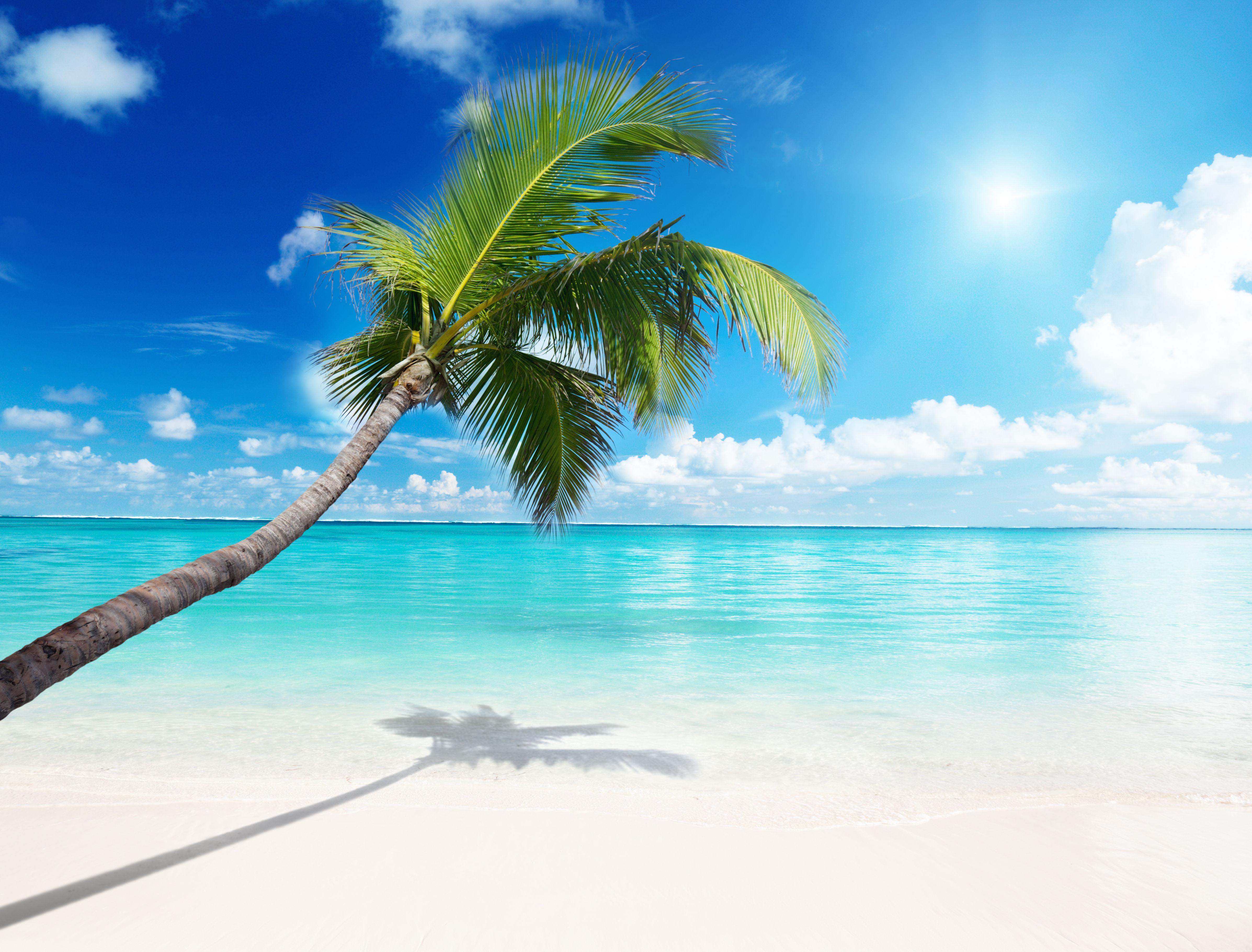 Arri res plans plage palmier maximumwall - Image palmier ...