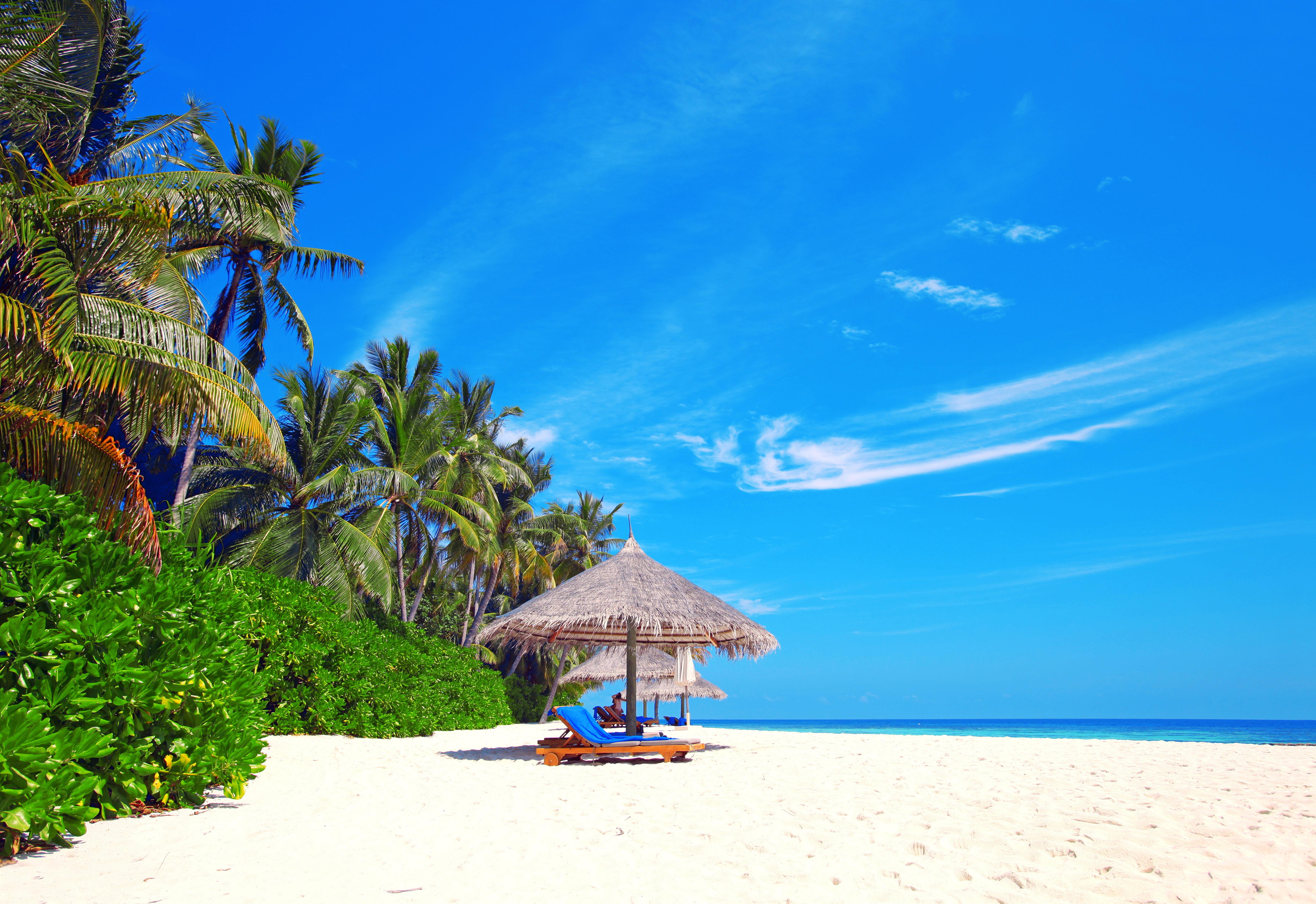 Arri res plans plage palmier maximumwall for Images gratuites fond ecran mer