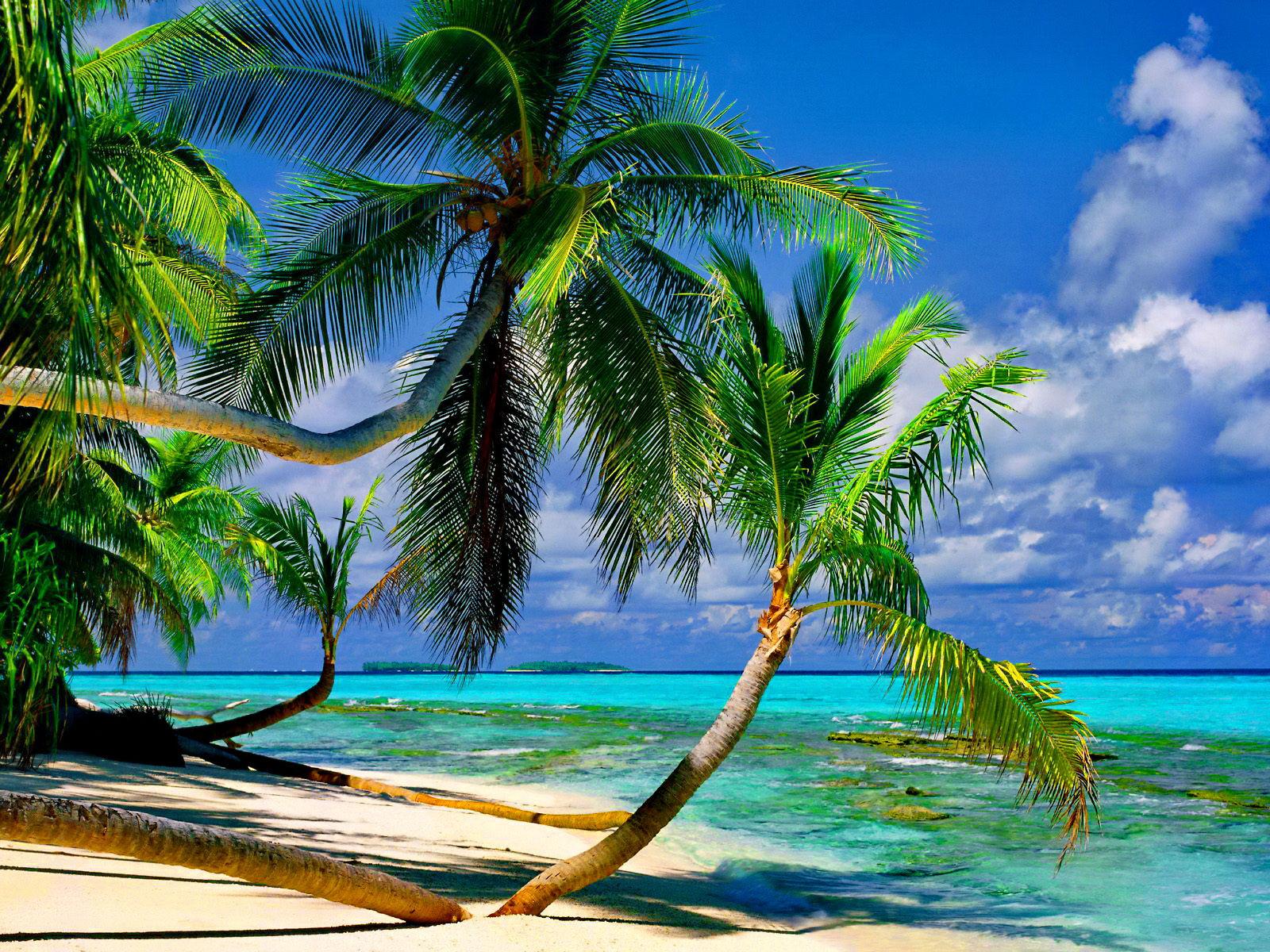 Pin plage palmier on pinterest for Fond ecran plage gratuit