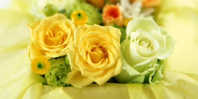 Fonds D Ecran Rose Fleur Maximumwall