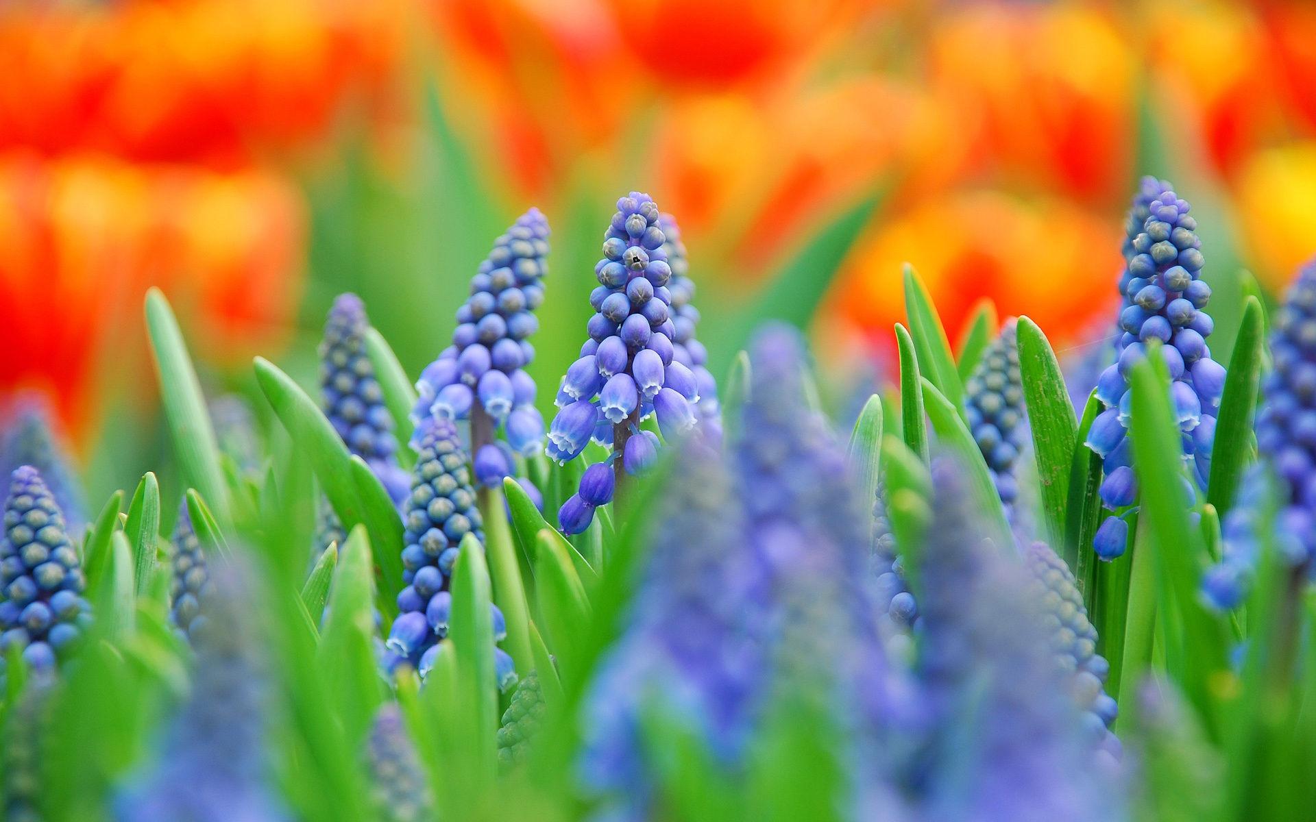 Fonds D Ecran Fleurs Bleues Maximumwall