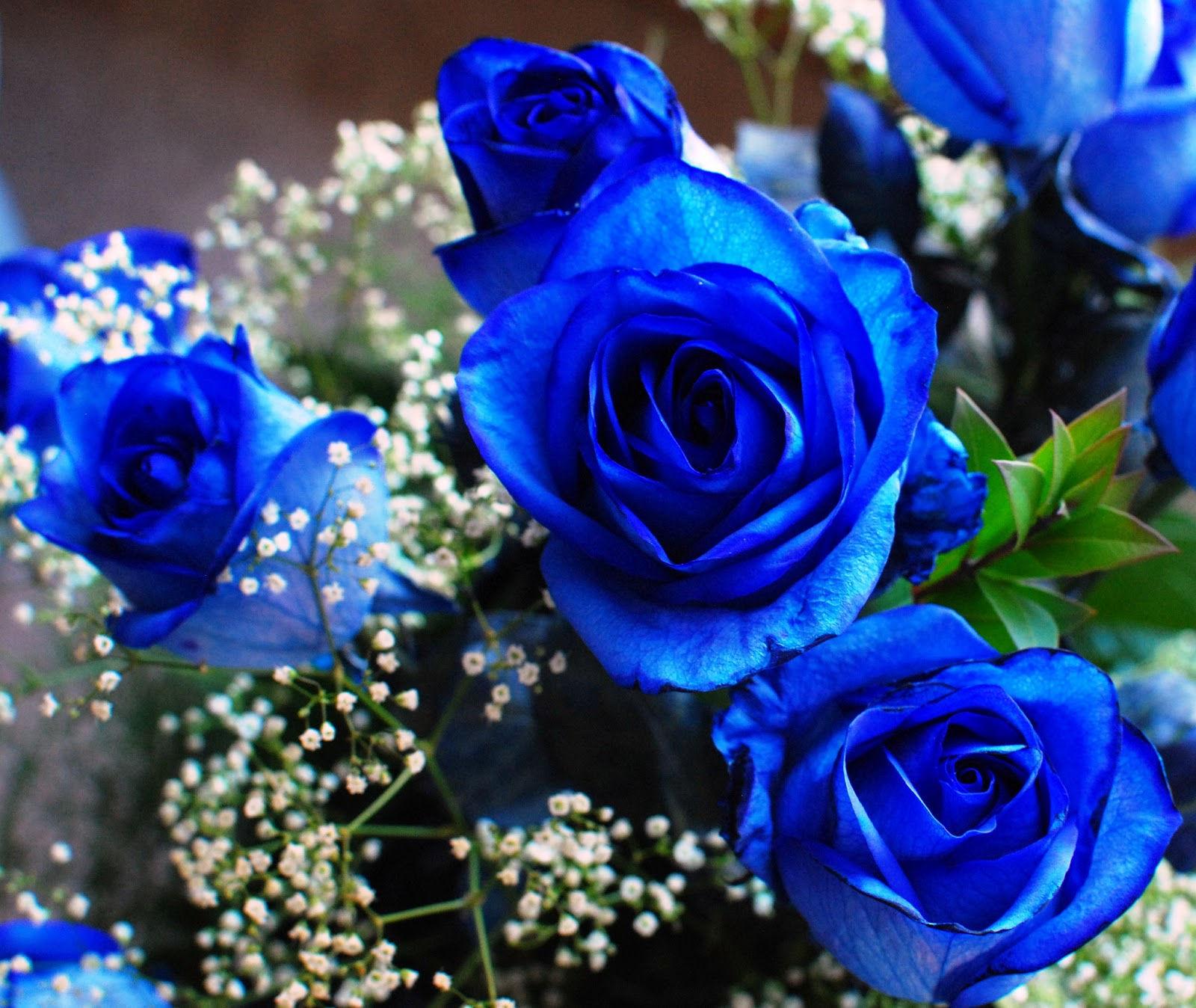 fonds d 39 cran fleurs bleues maximumwall. Black Bedroom Furniture Sets. Home Design Ideas
