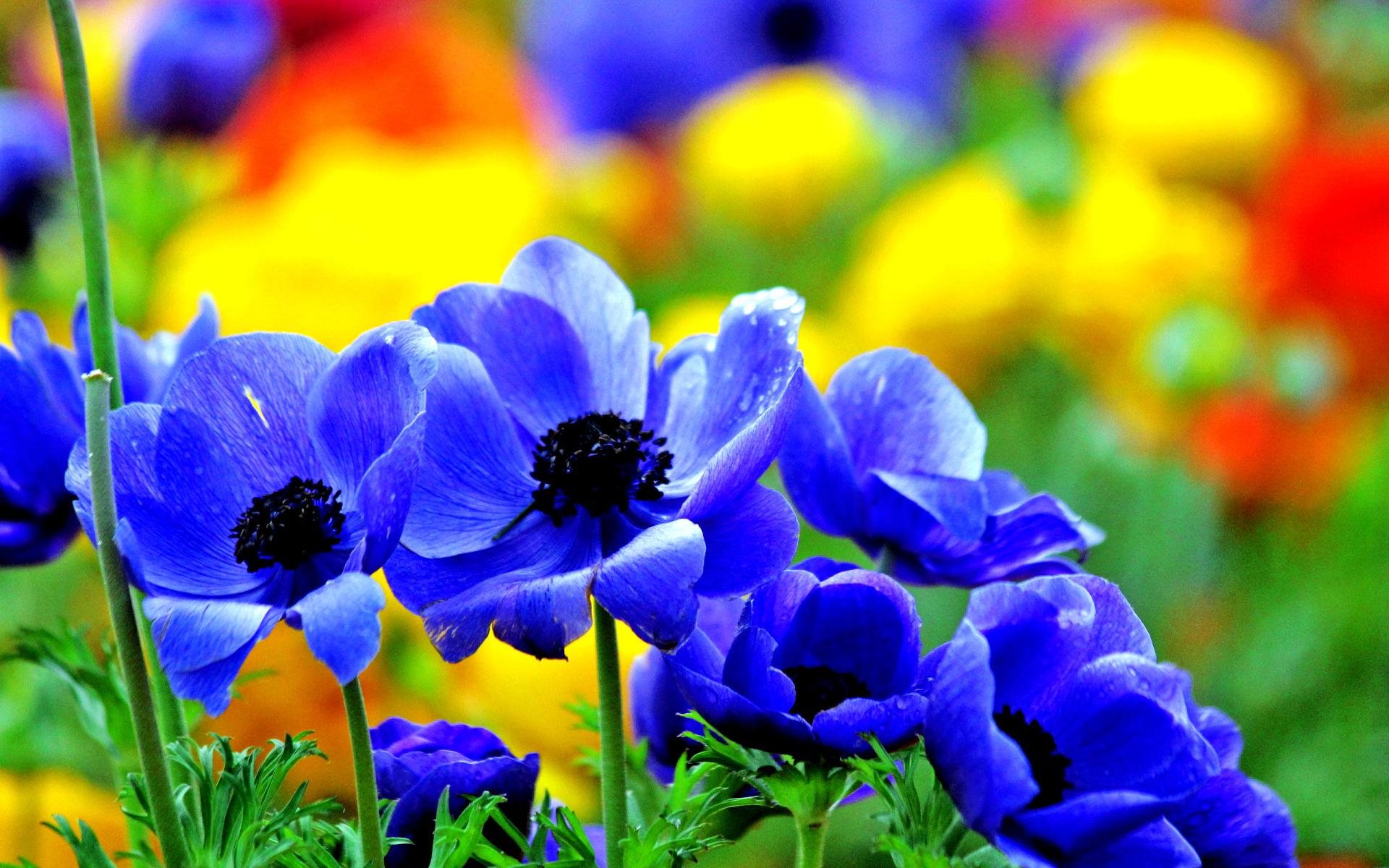 Photo Fleurs Bleues