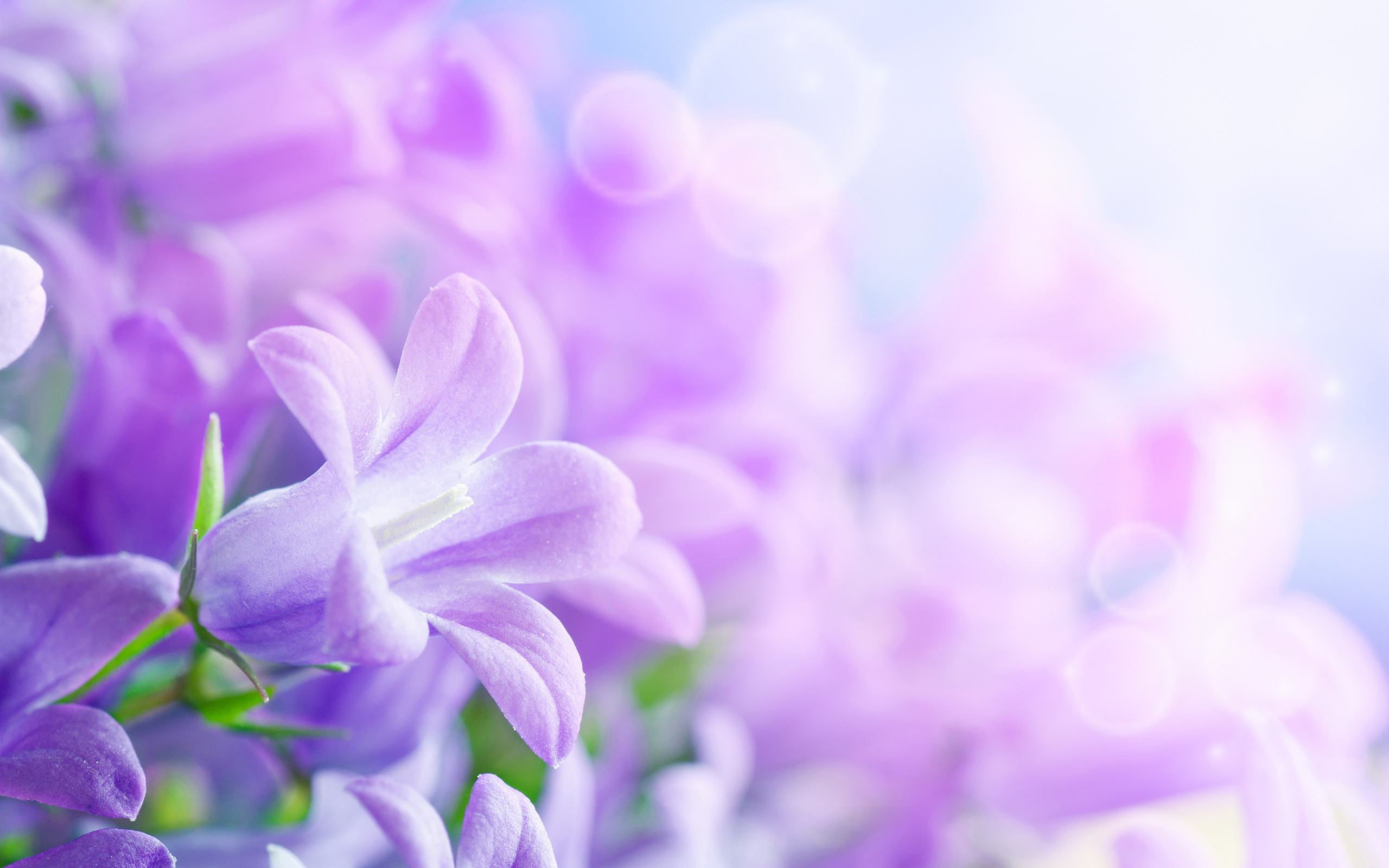 Fonds d 39 cran fleurs mauves maximumwall for Fond ecran ete fleurs
