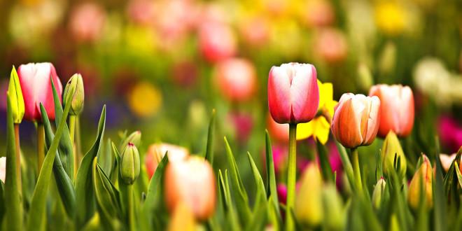 Fonds D Ecran Fleurs Multicolores Maximumwall