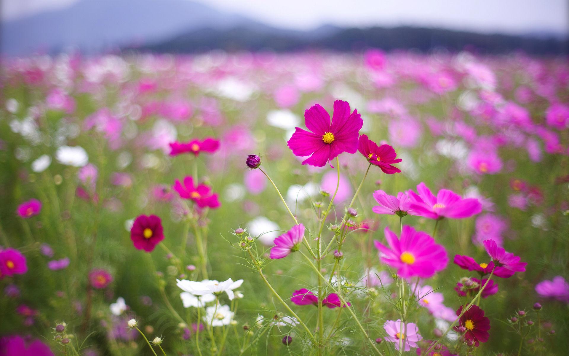 Fonds d 39 cran fleurs multicolores maximumwall for Foto fond ecran