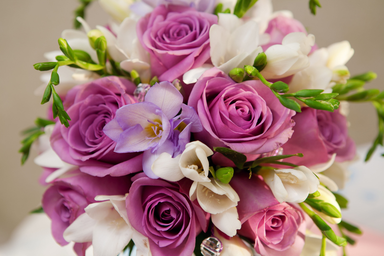 Fond D Ecran Fleur Rose Telecharger