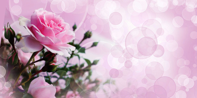 Fonds D Ecran Fleurs Roses Maximumwall