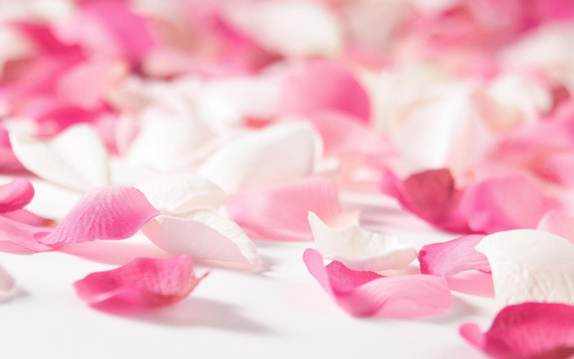 Best Love Fond Ecran Hd: Fonds D'écran Fleurs Roses