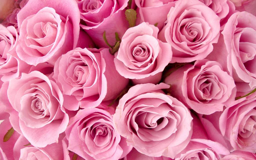 Fonds d'écran Fleurs Roses - MaximumWall