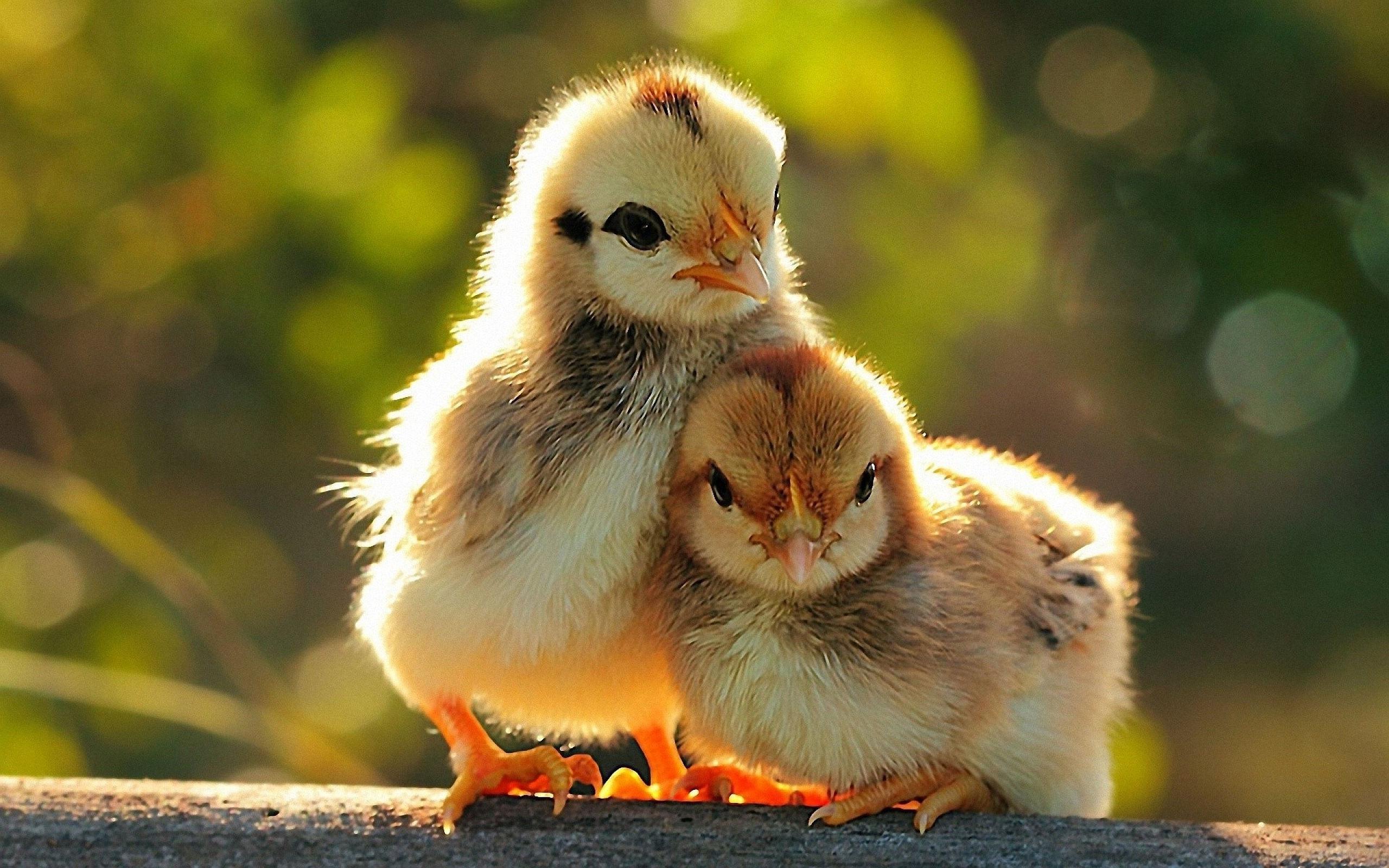 Fonds d 39 cran animaux comiques maximumwall - Image d animaux gratuit ...