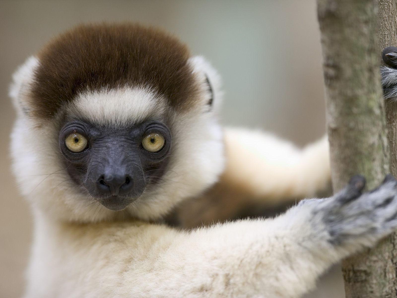 Fonds d 39 cran animaux dr les maximumwall for Foto de fond ecran