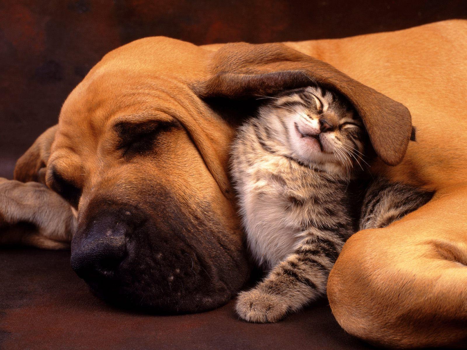 """Résultat de recherche d'images pour """"images animaux droles gratuites"""""""
