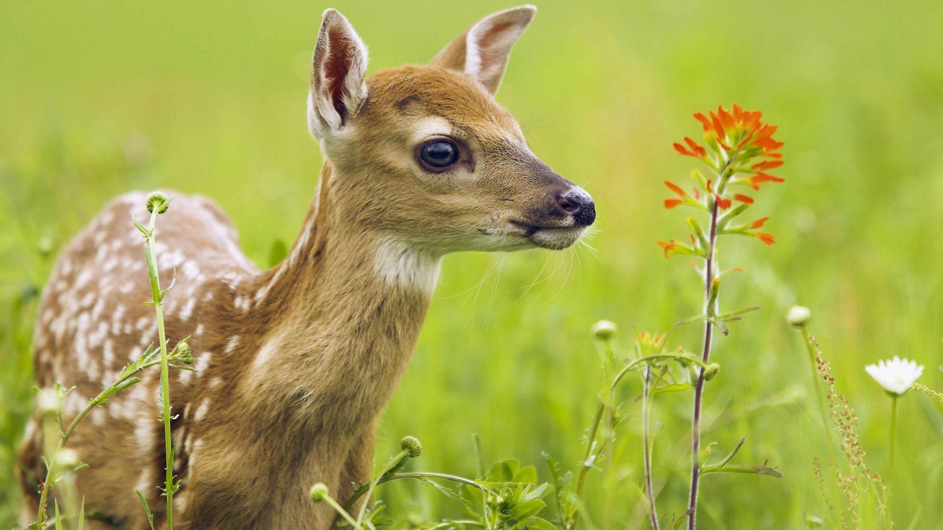 fonds d 39 cran animaux mignons maximumwall