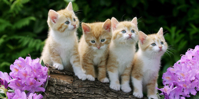 Fonds d 39 cran animaux mignons maximumwall for Fond ecran gratuit animaux