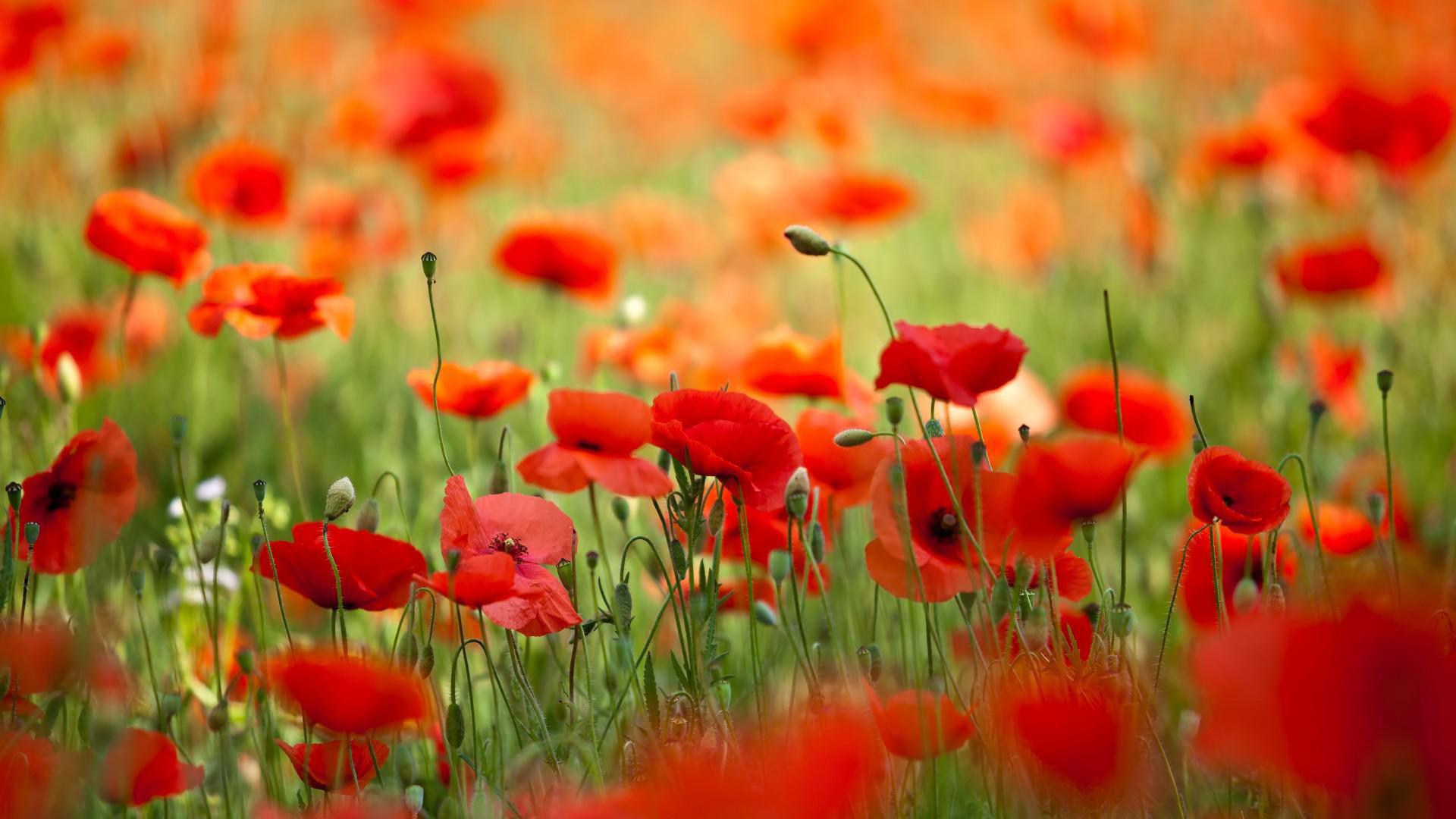 Fonds D Ecran Fleurs Magnifiques Maximumwall