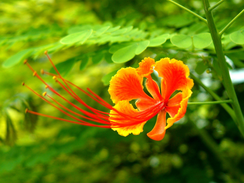 Fonds d 39 cran fleurs magnifiques maximumwall for Site de fleurs