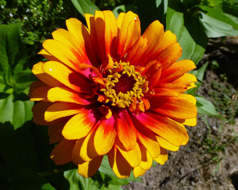 Fonds d'écran Fleurs Magnifiques - MaximumWall