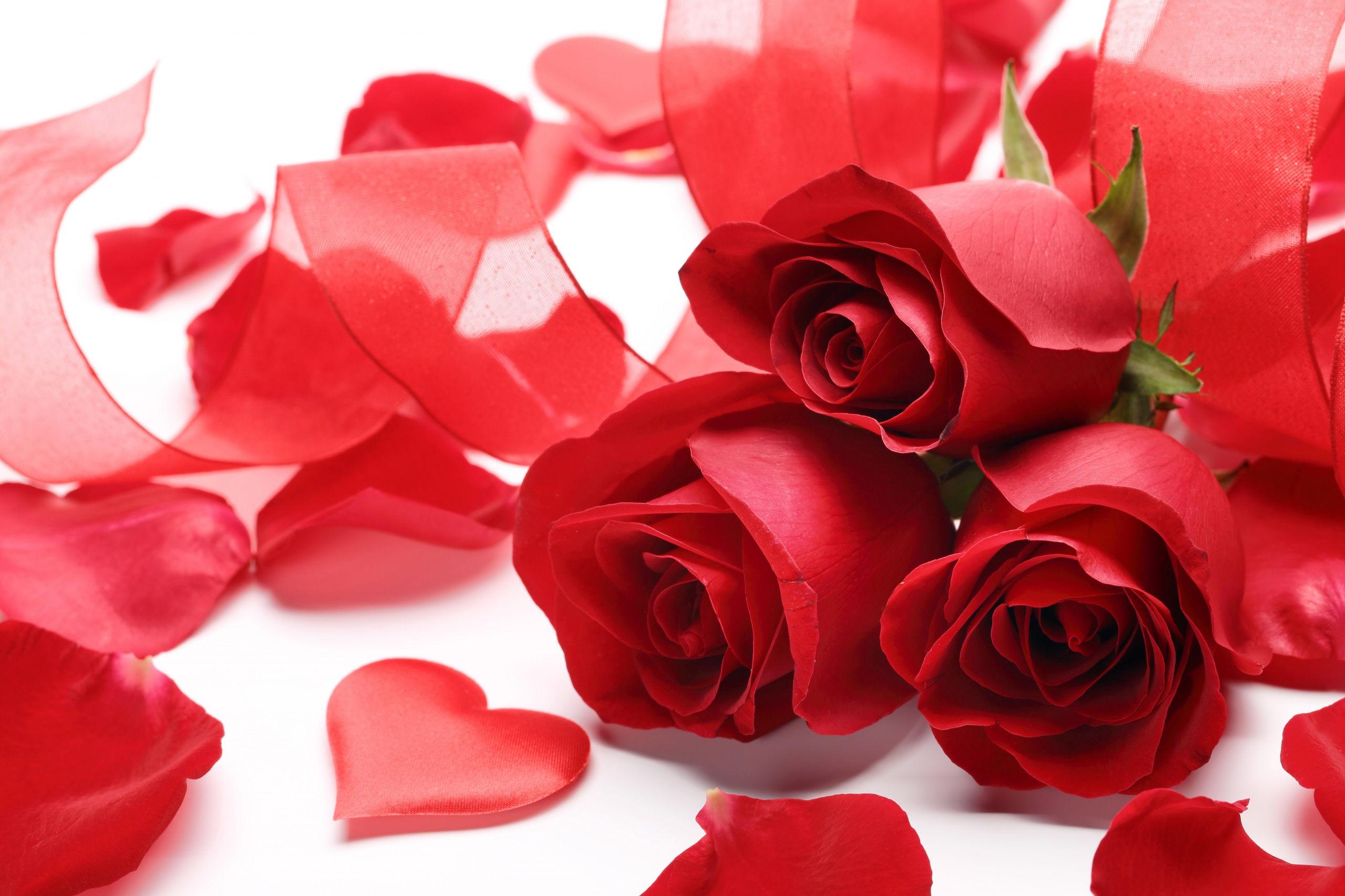 fonds d 39 cran st valentin fleur rose maximumwall. Black Bedroom Furniture Sets. Home Design Ideas