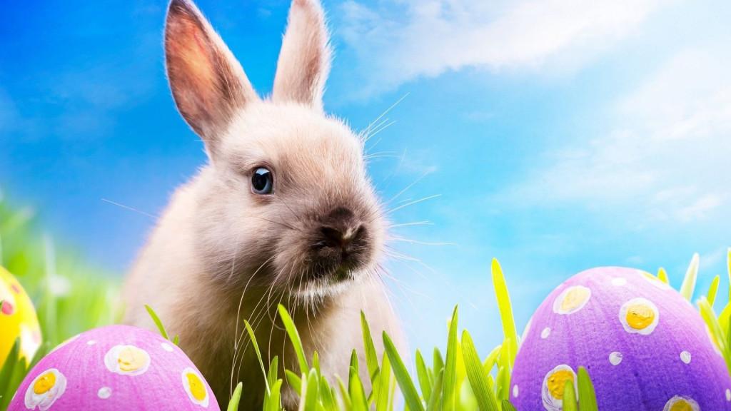 Fonds d 39 cran lapins de p ques maximumwall - Image lapin de paques ...